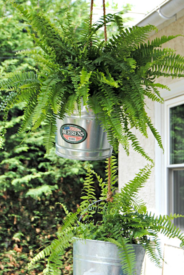 Using galvanized buckets as a hanging planter is awesome!